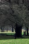 Parks_Judith Modrak